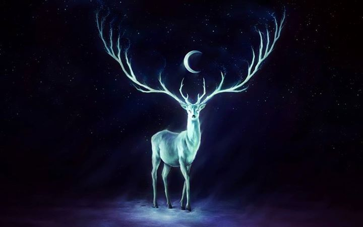 antelope-dark-night-deer-moon-Favim.com-2501651